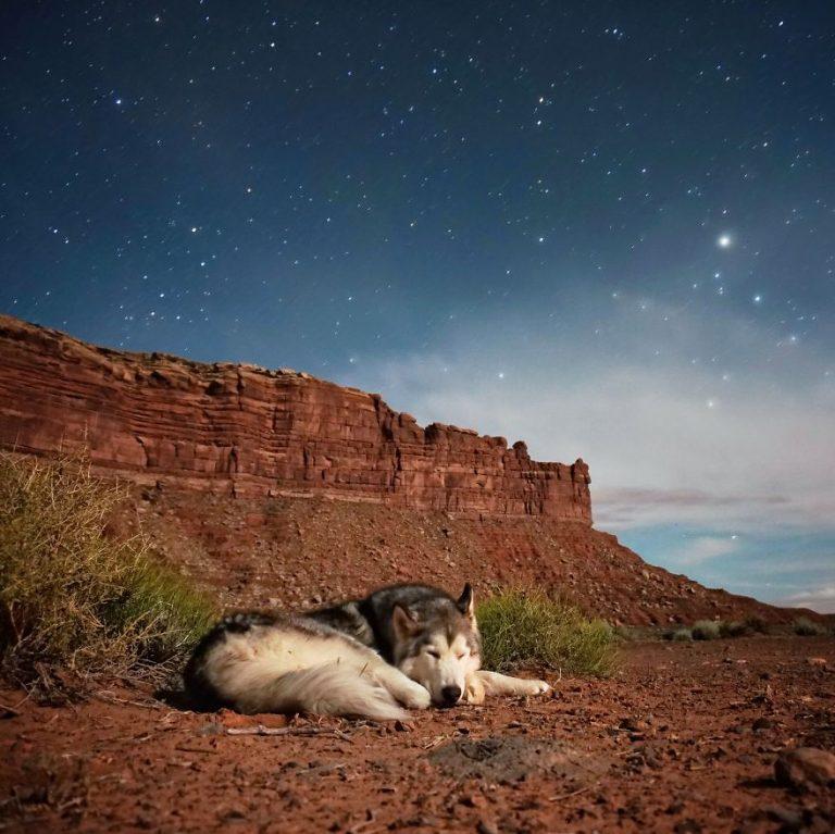 Kurt Köpeği ile Destansı Maceralar Yaşayan Adamdan Muhteşem Fotoğraflar